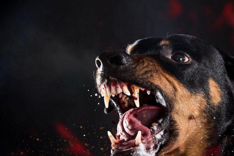 Lavoratore Sbranato Dai Cani?  Responsabilità Del Datore Di Lavoro